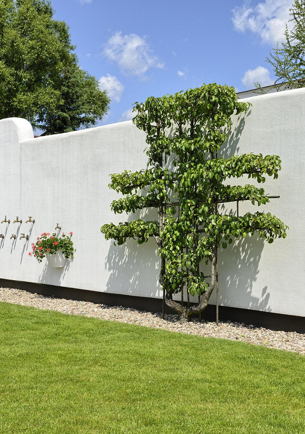 Ogrodnicze usługi